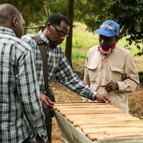Building beehives for the fences